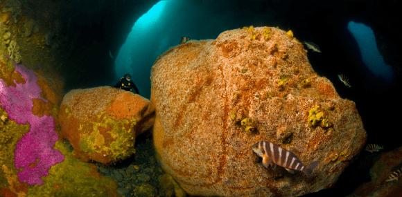 Diving in Kapiti Marine Reserve.