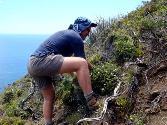 Peter eradicating pine western end Surville Cliffs 16112010-4