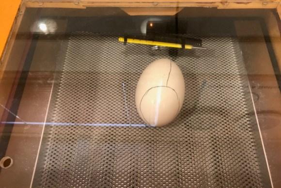 Kiwi egg in an incubator.