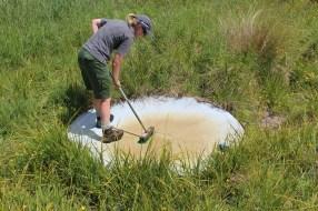 Nichy scrubbing the water ponds. Photo Karlene Taylor