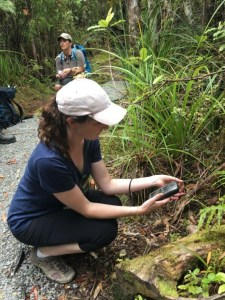 Emma Bodley from Auckland Botanic Gardens (a member of Botanic Gardens Australia and New Zealand) notes the locations of Metrosideros parkinsonii. Photo: Bec Stanley.