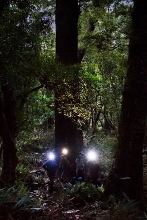 Bat monitoring in Whirinaki. Photo: Neil Hutton