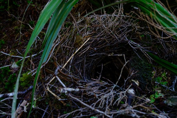 burrow-3