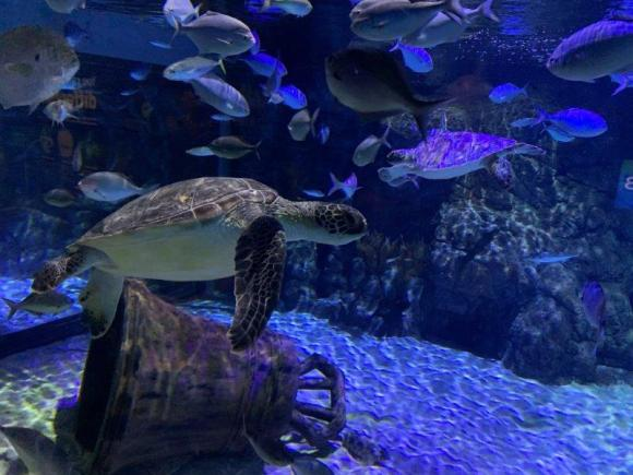 wwd image 2 Green turtle at Kelly Tarlton's.jpg