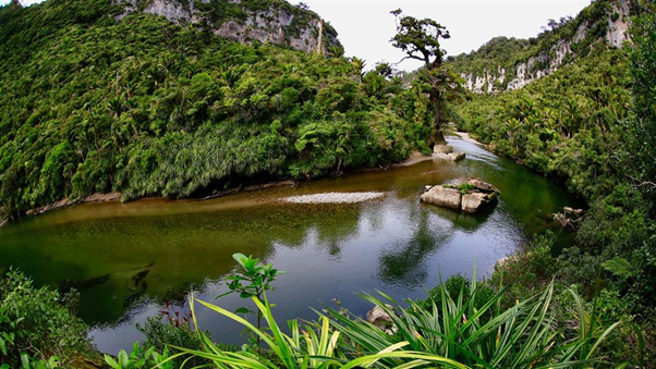 History on the Paparoa Track