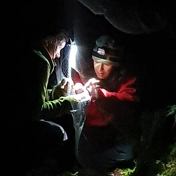 Fiordland Bat Diaries: The Ettrick Burn Part 1