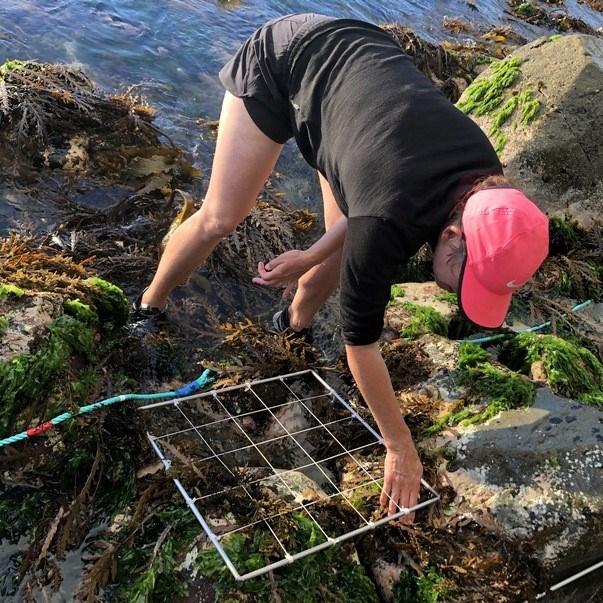 What's ashore? A fresh look at Kāpiti Intertidal
