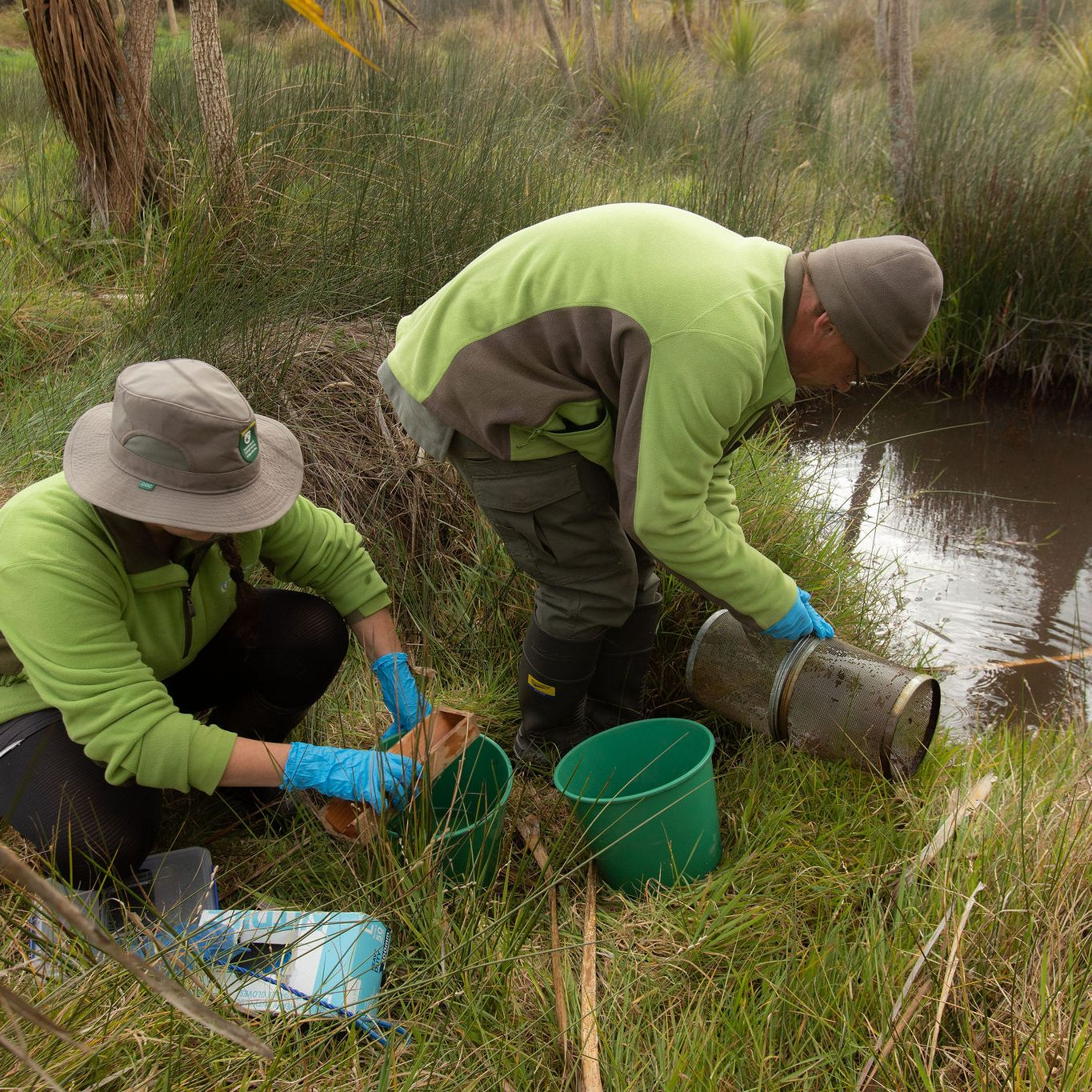 Rangers searching for black mudfish in a Waikato peat lake.
