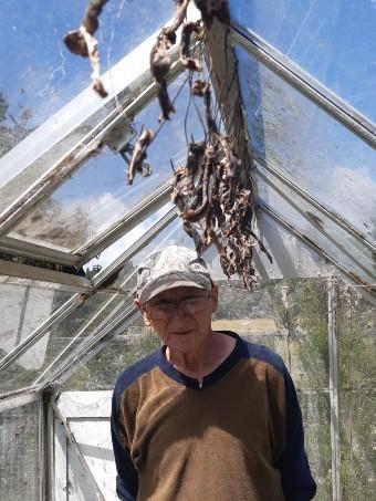 Octogenarian Bill Johnson dries venison in his glasshouse for bait in the predator traps. Photo by Trish Creagh