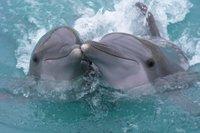 Orange mejora y pone guapas sus tarifas Delfín 12 SIM, Delfín 30 y Delfín 60