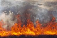 Orange y los OMV se salvan de la quema de telefonía móvil