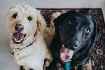 Dogley er en privat hundepension beliggende i hele Danmark