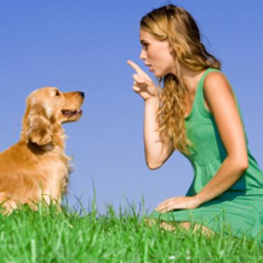 dog potty training tips