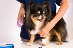 mobile dog grooming app