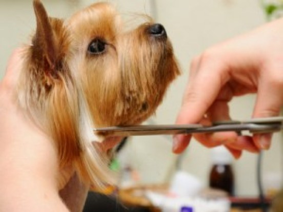 Dog Grooming in Ahmedabad