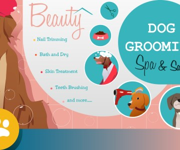How to become the Best Dog Grooming Company?
