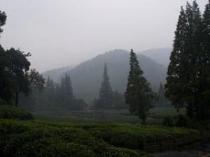 Photo of Dragon Well Plantation