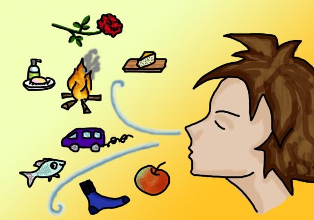 Brein versus taal: Wie snapt geuren niet?