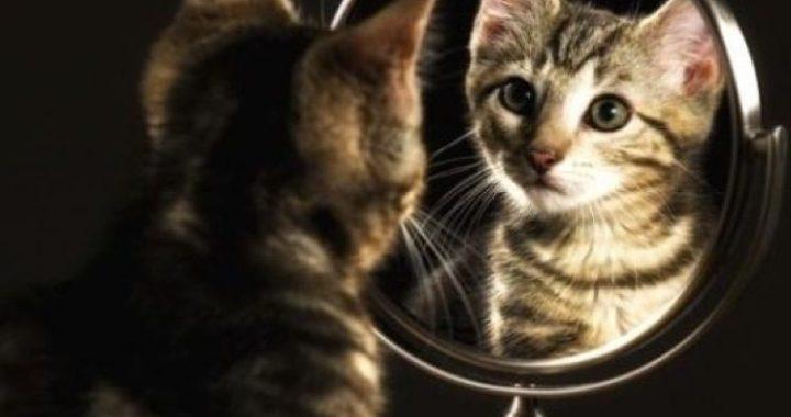 Hee, wie is dat? Dieren herkennen hun eigen spiegelbeeld