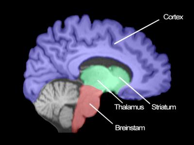 brein_uitleg