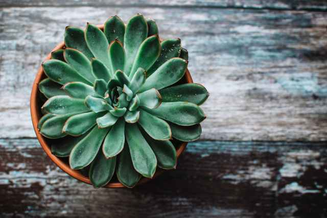 'Plants are good for you': Fact or fiction?