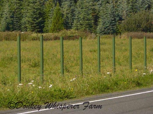 fencegreenpainted.jpg