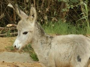 who said donkeys are any less than stallions?