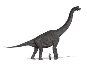 Sauropod and human