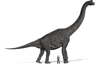 Sauropod and human