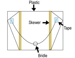Diagram of the sled kite.