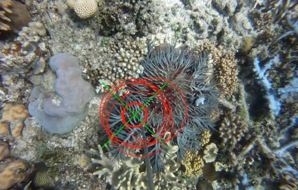 A coral reef. tHere is a spiky starfish with targets drawn on it.