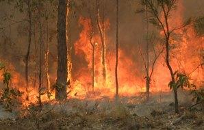 a bushfire