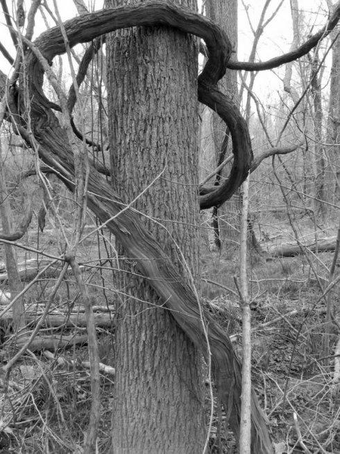 Botanical Embrace