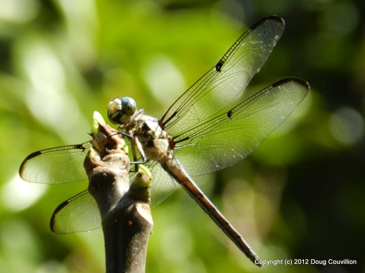 photo of a dragonfly perched on a branch