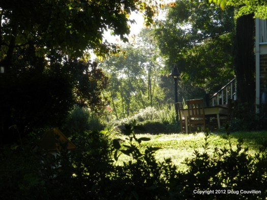 photograph of a sunlit garden surrounded by dark shrubbery