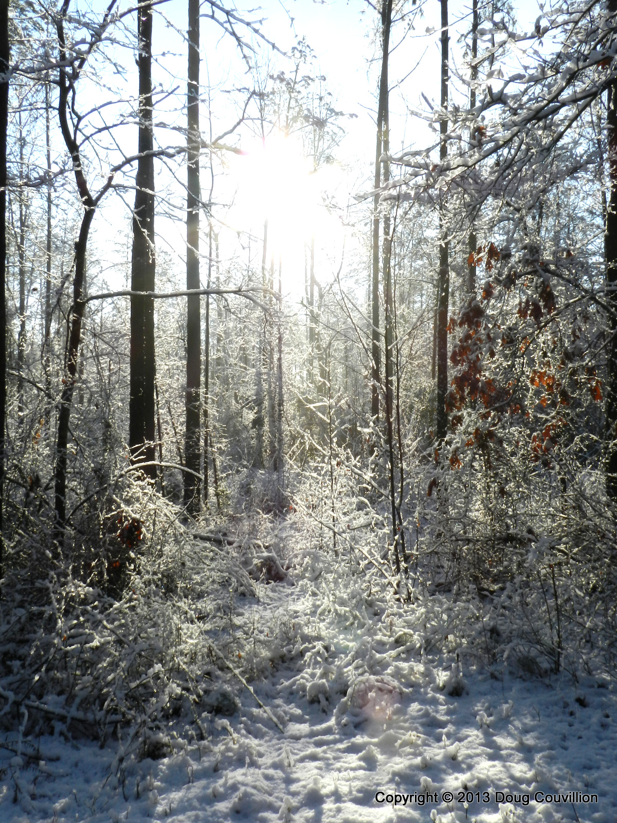 photograph of a snow covered forest at sunrise