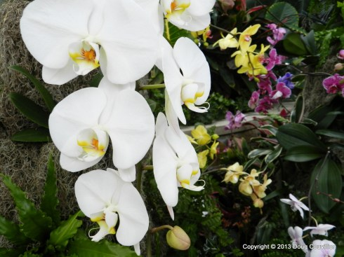 color photograph of a variety of orchid blooms