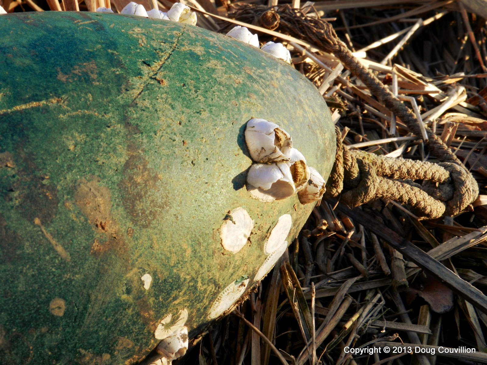 photograph of a buoy washed up on shore
