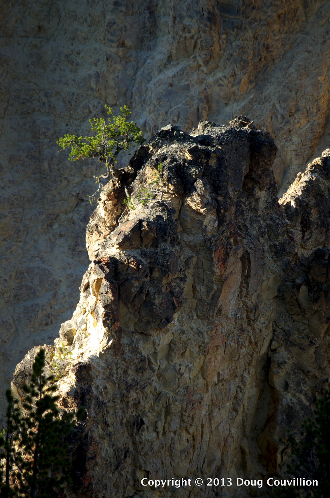 photograph of a single tree growing at the top of a cliff