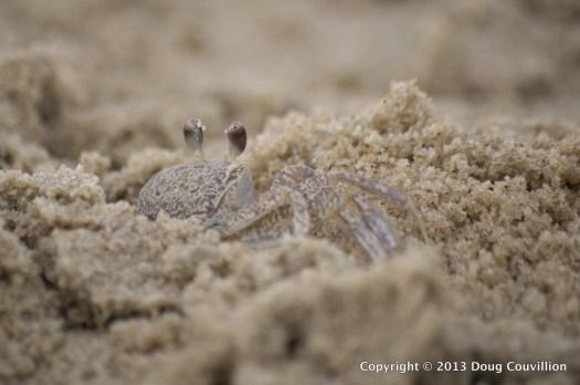 photograph of a crab in the sand at Corolla, North Carolina