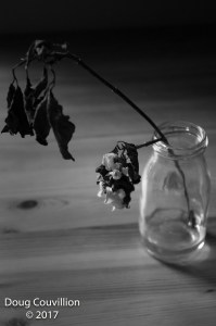 black and white photograph of a wilted dogwood flower in a jar of water, by Doug Couvillion