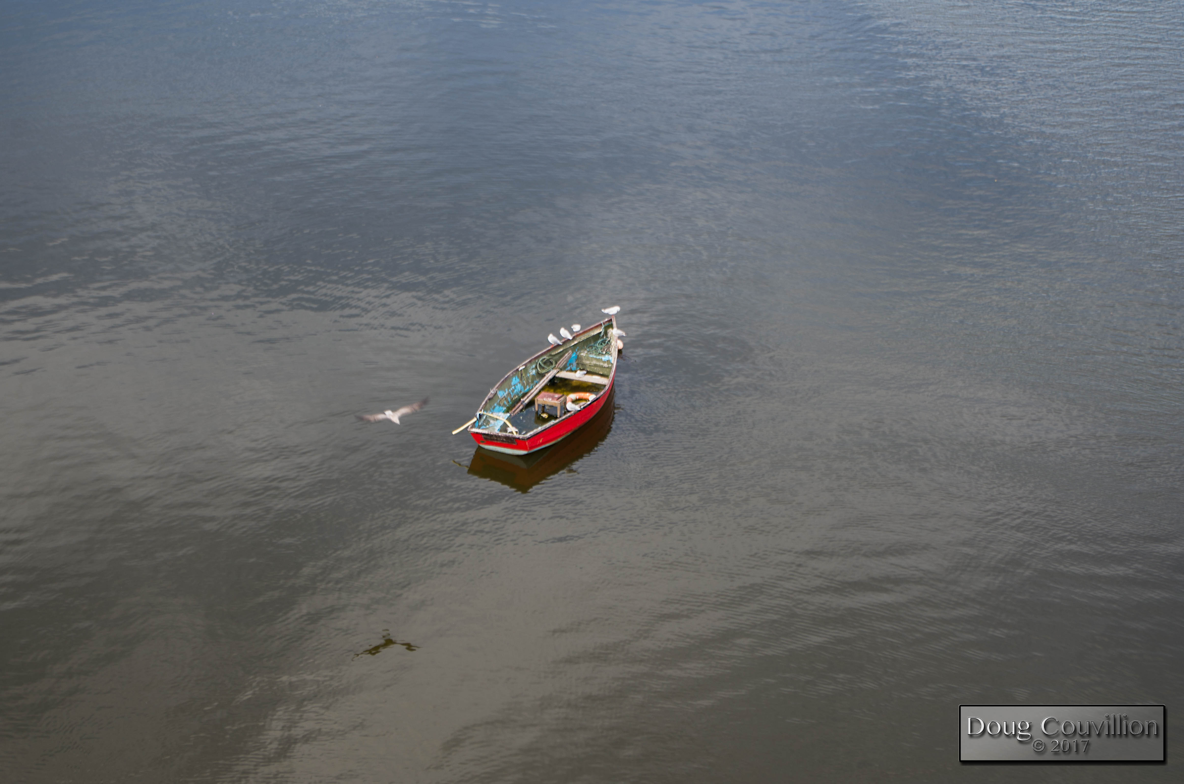 Photograph of a boat and seagulls on the River Lee, Cork, Ireland