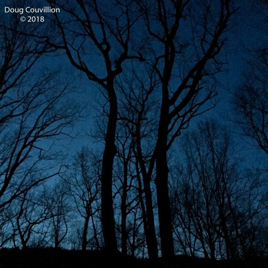 Photograph of bare trees silhouette against a dark evening sky by Doug Couvillion