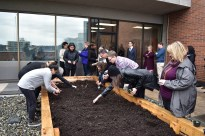 College community members help plant the Aboriginal Garden on the New West Campus green roof