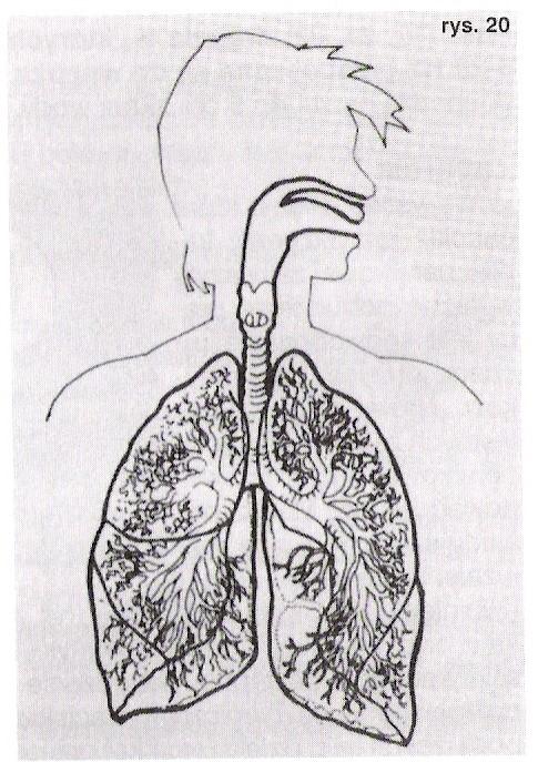 Oddychanie