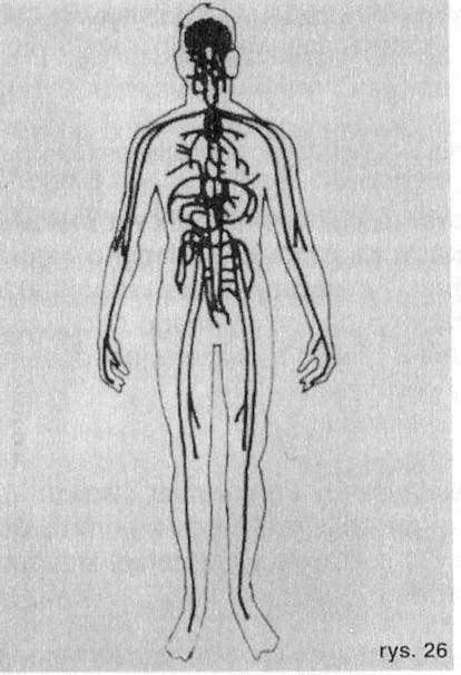 System nerwowy