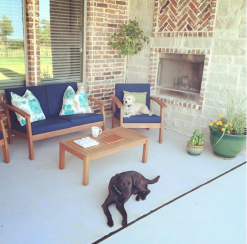 Dogs on patios
