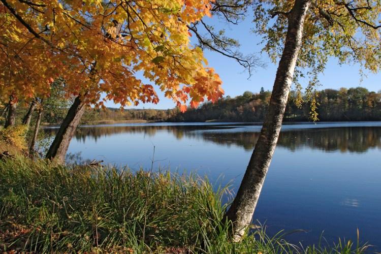 autumn trees by lake 2.jpg