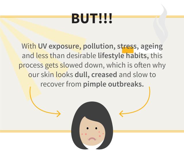 Skin renewal process cycle