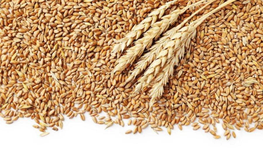 Makanan untuk kesehatan kulita ala duniamasak via hellosehat.com